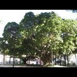 Brasilien057.jpg