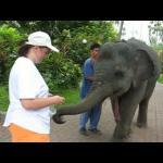 Elephant.flv.jpg
